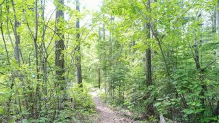 Photo 5: Lot B THOMPSON ROAD in Bonnington: Vacant Land for sale : MLS®# 2459440