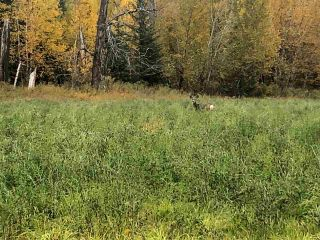 Photo 6: JOHNSTON ROAD in South Peace: Fort St. John - South Peace Land for sale (Fort St. John (Zone 60))  : MLS®# R2308370