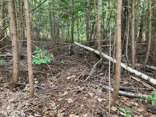 Photo 2: Lot 51 Forest Dr.: Blind Bay Land Only for sale (Shuswap)  : MLS®# 10232622