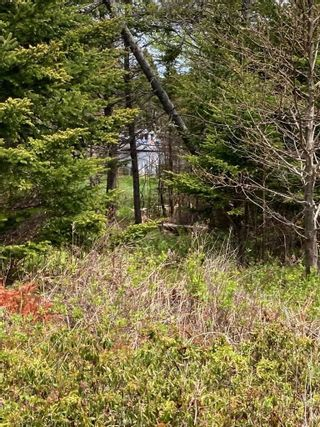 Photo 17: Lot Mushaboom Road in Mushaboom: 35-Halifax County East Vacant Land for sale (Halifax-Dartmouth)  : MLS®# 202114485