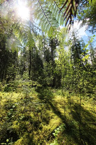Photo 28: 1706 Blind Bay Road: Blind Bay Vacant Land for sale (South Shuswap)  : MLS®# 10185440