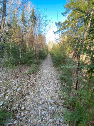 Photo 23: Saunders Road in Durham: 108-Rural Pictou County Vacant Land for sale (Northern Region)  : MLS®# 202108674