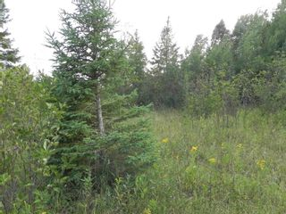 Photo 10: 22084 PT 2 PARCEL, WHITMORE RD in FORT FRANCES: Vacant Land for sale : MLS®# TB212402