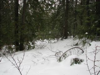 Photo 11: Lot 1 Trans Can Hwy: Blind Bay Land Only for sale (Shuswap)  : MLS®# 10148323