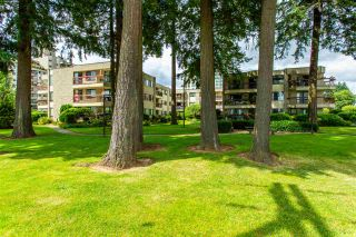 "Photo 35: 231 31955 OLD YALE Road in Abbotsford: Abbotsford West Condo for sale in ""EVERGREEN VILLAGE"" : MLS®# R2477163"