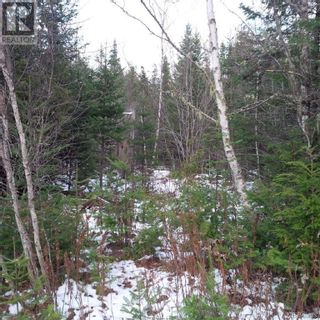 Photo 12: - Yourette Road in Dewolfe: Vacant Land for sale : MLS®# NB062662