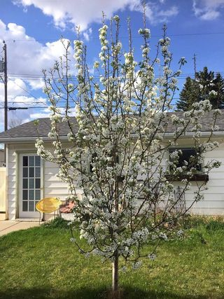 Photo 23: 16116 108 Avenue in Edmonton: Zone 21 House for sale : MLS®# E4247704