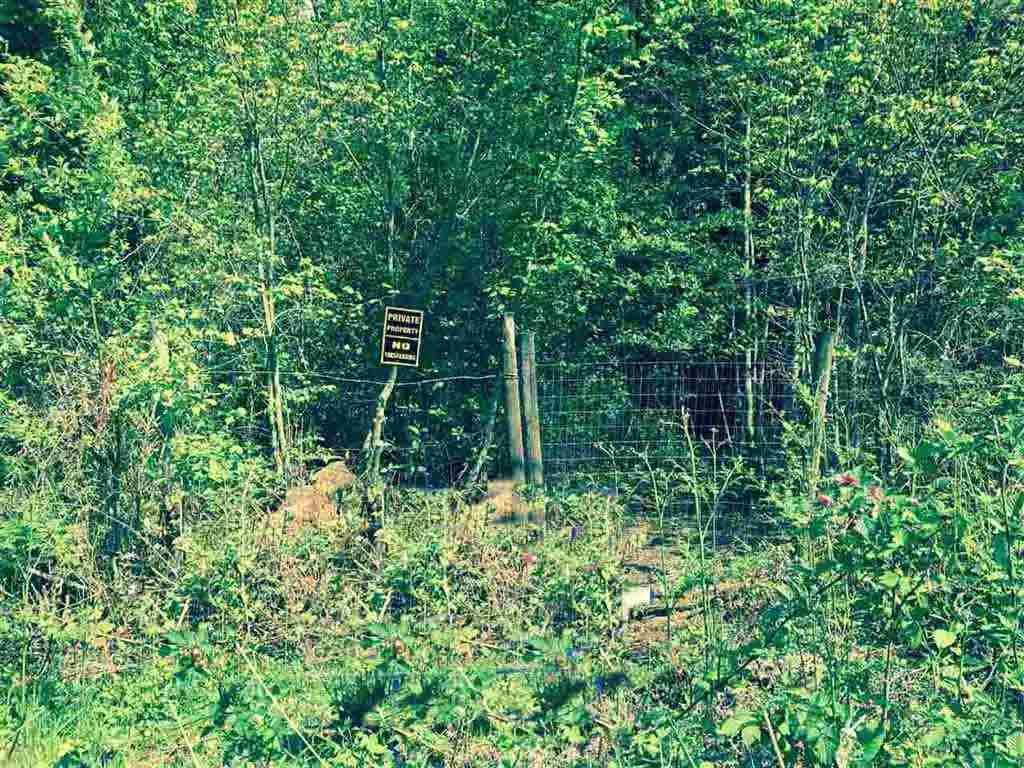 Main Photo: 12628 246 Street in Maple Ridge: Websters Corners Land for sale : MLS®# R2087626