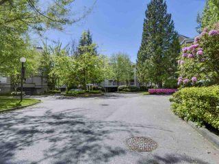 Photo 13: 135 7451 MOFFATT ROAD in Richmond: Brighouse South Condo for sale : MLS®# R2168796