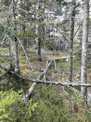 Photo 9: Highway 332 in Bayport: 405-Lunenburg County Vacant Land for sale (South Shore)  : MLS®# 202118989