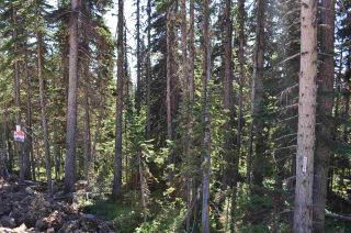 """Photo 10: 210 ALPINE Way in Smithers: Smithers - Rural Land for sale in """"Hudson Bay Mountain Estates"""" (Smithers And Area (Zone 54))  : MLS®# R2453895"""