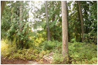 Photo 8: Lot 49 Forest Drive: Blind Bay Vacant Land for sale (Shuswap Lake)  : MLS®# 10217653