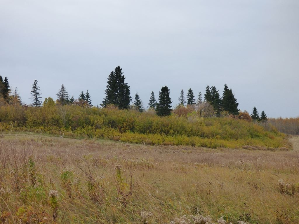 Photo 15: Photos: N1/2 SE19-57-1-W5: Rural Barrhead County Rural Land/Vacant Lot for sale : MLS®# E4217154