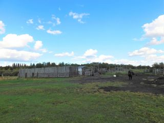 Photo 5: Rge Rd 231 North of Twp Rd 564: Rural Sturgeon County Rural Land/Vacant Lot for sale : MLS®# E4262842