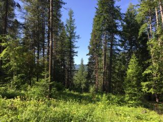 Photo 5: 1969 SANDY ROAD in Castlegar: Vacant Land for sale : MLS®# 2461033