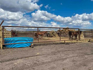 Photo 34: Twp 604 Rg Rd 244: Rural Westlock County Rural Land/Vacant Lot for sale : MLS®# E4223747
