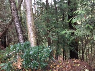 Photo 5: 668 HILLCREST Road in Gibsons: Gibsons & Area House for sale (Sunshine Coast)  : MLS®# R2523636
