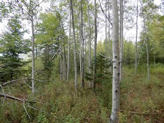 Photo 2: Tanner Hill Road in Limerock: 108-Rural Pictou County Vacant Land for sale (Northern Region)  : MLS®# 202121301