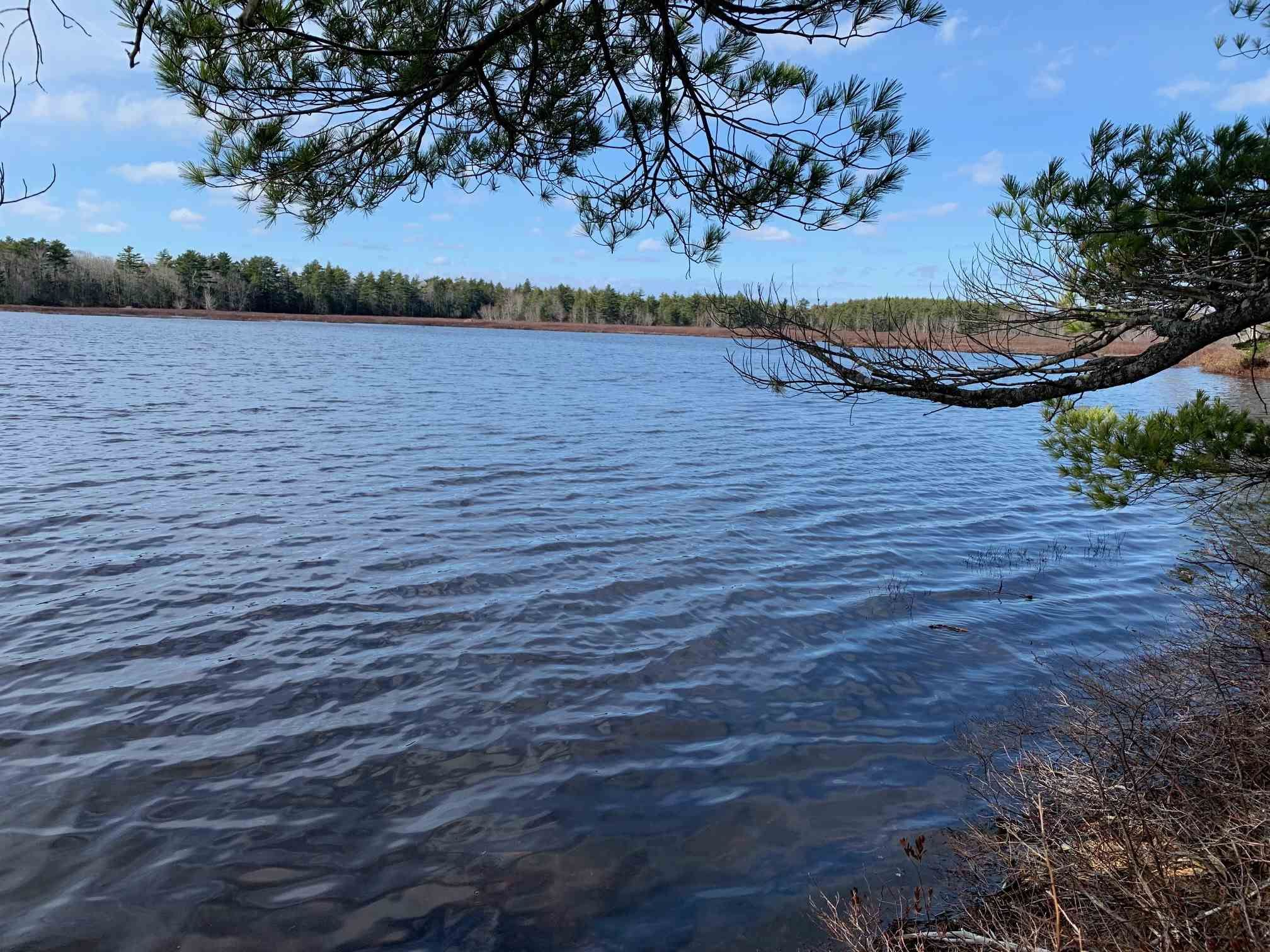 Main Photo: Lot E Hebb Road in Wileville: 405-Lunenburg County Vacant Land for sale (South Shore)  : MLS®# 202106726