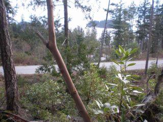 "Photo 8: LOT 105 JOHNSTON HEIGHTS Road in Pender Harbour: Pender Harbour Egmont Land for sale in ""DANIEL POINT"" (Sunshine Coast)  : MLS®# R2244687"