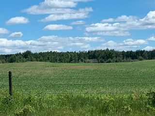 Photo 4: TWP 475 RR 31: Rural Leduc County Rural Land/Vacant Lot for sale : MLS®# E4244953