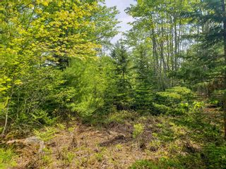 Photo 13: Lot 101 Dorey Mills Road in Clearland: 405-Lunenburg County Vacant Land for sale (South Shore)  : MLS®# 202119645