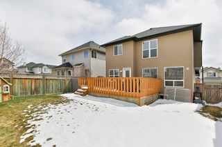 Photo 31: 246 CITADEL ESTATES Heights NW in Calgary: Citadel Detached for sale : MLS®# C4242147