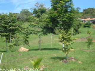 Photo 4: Trinity Hills Valley - Lot for Sale