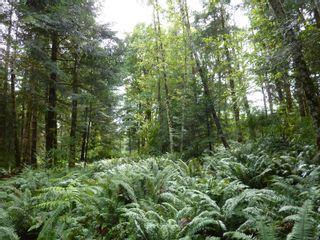 Photo 14: SL 16 950 HERIOT BAY Rd in : Isl Quadra Island Land for sale (Islands)  : MLS®# 853701