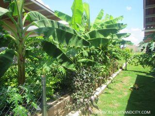 Photo 4: C-Paradise Furnished Resale