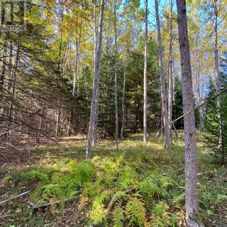Photo 4: Acreage Middle New Cornwall in Middle New Cornwall: Vacant Land for sale : MLS®# 202125307