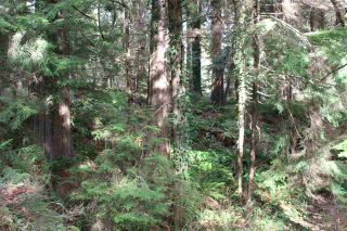 Photo 19: 5852 MARINE Way in Sechelt: Sechelt District Land for sale (Sunshine Coast)  : MLS®# R2545877