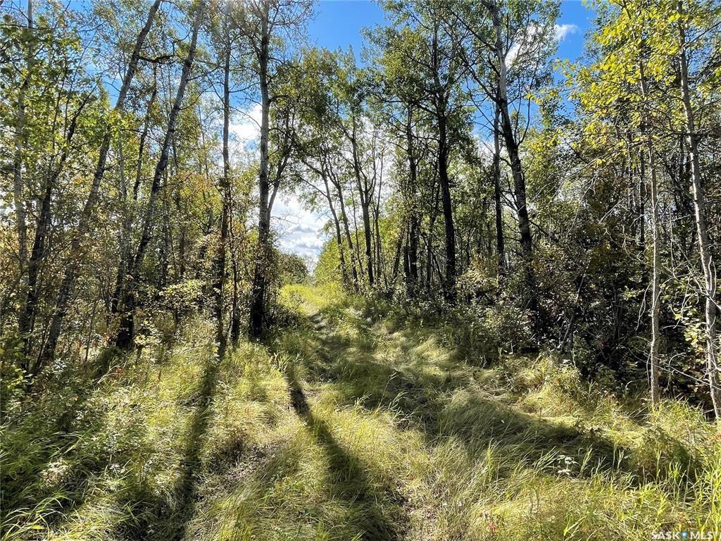 Main Photo: 23 Acres South of Goodsoil in Beaver River: Lot/Land for sale (Beaver River Rm No. 622)  : MLS®# SK871123