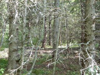 Photo 9: Salem Road in Greenhill: 108-Rural Pictou County Vacant Land for sale (Northern Region)  : MLS®# 202121181