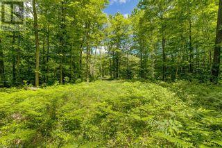 Photo 13: 1832 COUNTY RD. 40 Road in Quinte West: Vacant Land for sale : MLS®# 40154512