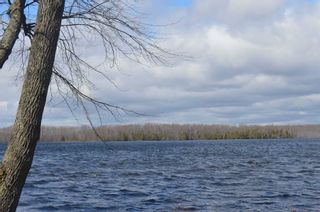 Photo 12: 195 Campbell Beach Road in Kawartha Lakes: Rural Carden House (Bungalow) for sale : MLS®# X4741548