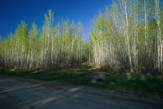 Photo 20: RR 21 TWP 565A Lake Nakamun: Rural Lac Ste. Anne County Rural Land/Vacant Lot for sale : MLS®# E4246330