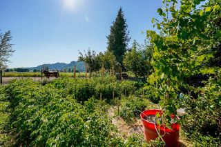 Photo 38: 39039 NORTH PARALLEL Road in Abbotsford: Sumas Prairie House for sale : MLS®# R2602841