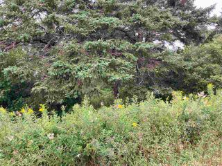 Photo 7: Acreage East Chezzetcook Road in East Chezzetcook: 31-Lawrencetown, Lake Echo, Porters Lake Vacant Land for sale (Halifax-Dartmouth)  : MLS®# 202015825