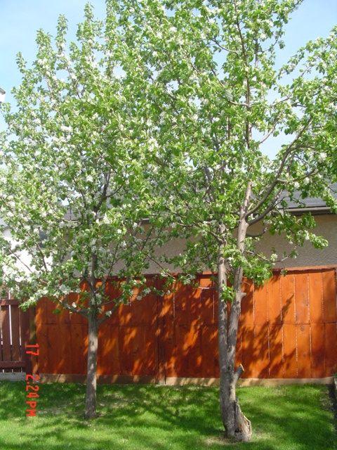Photo 11: Photos: 14 SANTA CLARA Crescent in WINNIPEG: Fort Garry / Whyte Ridge / St Norbert Single Family Detached for sale (South Winnipeg)  : MLS®# 2708175