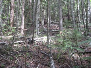 Photo 7: Lot 23 Vickers Trail in Anglemont: Land Only for sale : MLS®# 10011652