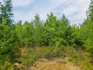 Photo 6: Lot 101 Dorey Mills Road in Clearland: 405-Lunenburg County Vacant Land for sale (South Shore)  : MLS®# 202119645