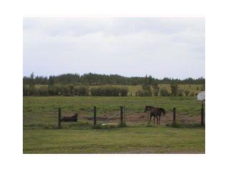 Photo 9: 17065 ROBYN Way in Prince George: Blackwater House for sale (PG Rural West (Zone 77))  : MLS®# N224689