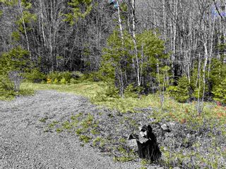 Photo 11: Lot VH-1 Highway 10 in Meisners Section: 405-Lunenburg County Vacant Land for sale (South Shore)  : MLS®# 202111350