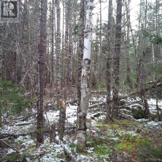 Photo 11: - Yourette Road in Dewolfe: Vacant Land for sale : MLS®# NB062662