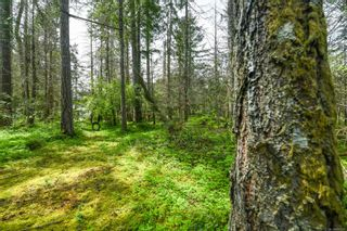 Photo 52: 3534 Royston Rd in : CV Courtenay South House for sale (Comox Valley)  : MLS®# 875936
