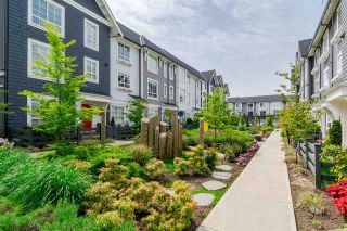 """Photo 29: 68 8438 207A Street in Langley: Willoughby Heights Townhouse for sale in """"YORK By Mosaic"""" : MLS®# R2456405"""