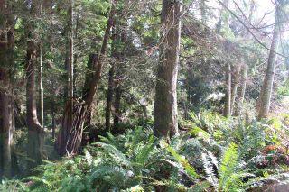 Photo 7: 5852 MARINE Way in Sechelt: Sechelt District Land for sale (Sunshine Coast)  : MLS®# R2545877