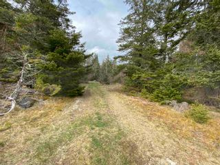 Photo 5: Sherbrooke Road in Greenvale: 108-Rural Pictou County Vacant Land for sale (Northern Region)  : MLS®# 202111683