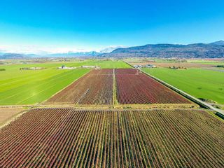 Photo 5: 4081 DIXON Road: Agri-Business for sale in Abbotsford: MLS®# C8035569
